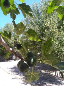 i 5 olivi - AbcAlberghi.com