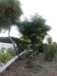 obrázek - Olive Tree Farm