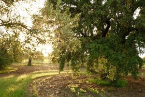 Fazenda Nova Country House (15 of 48)