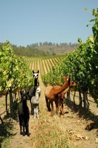 La Casona at Matetic Vineyards (23 of 28)