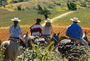 La Casona at Matetic Vineyards (17 of 23)