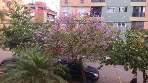 obrázek - Village Cavalhada