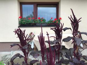 Summer house superiore, Appartamenti  Tuzla - big - 6