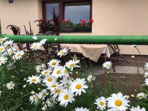 Summer house superiore, Appartamenti  Tuzla - big - 7