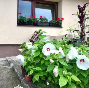 Summer house superiore, Appartamenti  Tuzla - big - 8