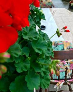 Summer house superiore, Appartamenti  Tuzla - big - 9