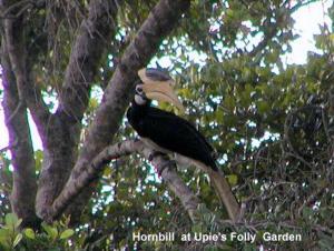 Upie's Folly Holiday Bungalow- Habarana - Habarana