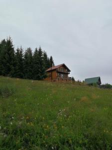 Cabana Cindy, Holiday homes  Muntele Cacovei - big - 30