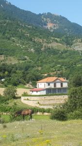 Villa BUSH - Quksi