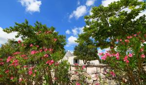 Trulli Alleria, Holiday homes  Ostuni - big - 27