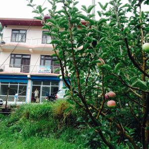Suket homestay, Ubytování v soukromí  Karsog - big - 43