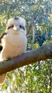 Phillip Island Nature Resort, Vily  Cowes - big - 20