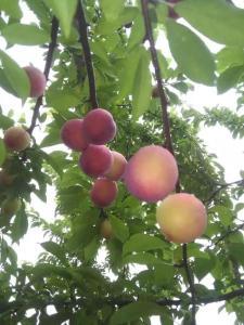 Albergues - Shizhu Huangshuiyu Fruit Hill Farmstay
