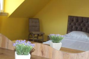 Accommodation in Samegrelo Zemo-Svaneti