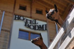 Hotel Bodmi Superior, Отели  Гриндельвальд - big - 52