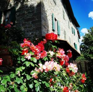 obrázek - Podere I Rovai-apt IL RIFUGIO-amazing view Tuscany