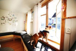 Tromso Activities Hostel, Hostely  Tromsø - big - 38