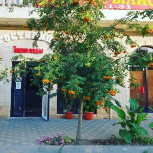 Отель Тихие сады