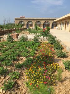 Hostels und Jugendherbergen - Qiankun Bay Fangxiaohu Farmstay