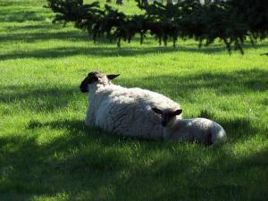 Fairmount Bed & Breakfast, Panziók  Basswood - big - 28