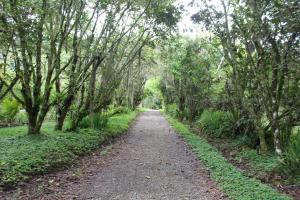 Talamanca Reserve, Отели  Rivas - big - 85