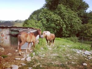 Agroturismo Pagoederraga, Farmy  Orio - big - 98