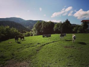 Agroturismo Pagoederraga, Farmy  Orio - big - 97