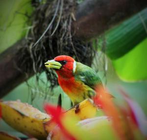 Talamanca Reserve, Отели  Rivas - big - 95
