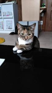 obrázek - Cat Cafe & Stay Cultus's Home