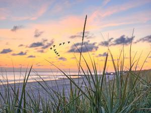 Ferienwohnung Strandkörbchen - Juliusruh