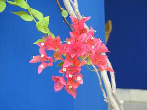 The Coral Tree (2 of 92)