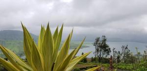 Tranquil Treasure, Chaty v prírode  Panchgani - big - 18