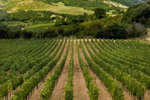 Castello di Velona Resort Thermal SPA & Winery, Hotels  Montalcino - big - 17