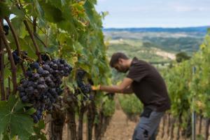 Castello di Velona Resort Thermal SPA & Winery, Hotels  Montalcino - big - 18