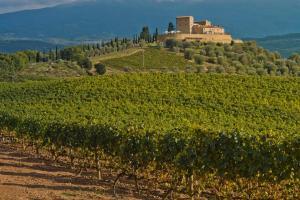 Castello di Velona Resort Thermal SPA & Winery, Hotels  Montalcino - big - 19