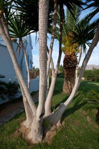 Ammos Naxos Exclusive Apartments & Studios, Aparthotels  Naxos Chora - big - 17