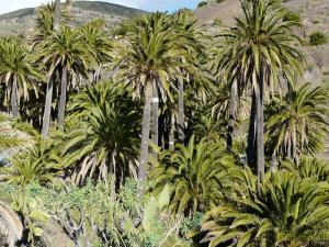 El Pirguan Holiday House, your oasis in La Gomera, Vallehermoso  - La Gomera