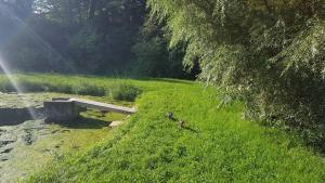 Rybvelvet, Prázdninové domy  Skořenice - big - 24