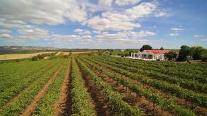 1837 Barossa Luxury Vineyard Cottages