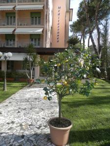 Hotel Mediterraneo, Hotels  Marina di Pietrasanta - big - 32