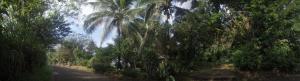 Rancho Verde de Osa