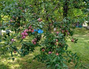 Agroturystyka Lulkowo