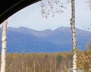 Birch and Roses - Wasilla
