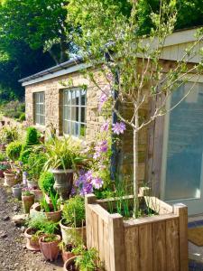 obrázek - Lavender cottage