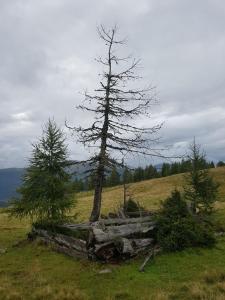 Neuwirth Hütte, Дома для отпуска  Гнезау - big - 45