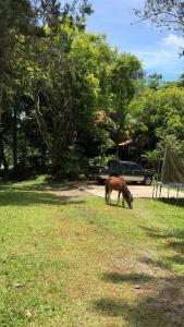 La Cabaña Hotel AND Camping, Turrialba