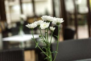 Dziki Potok Konferencje Grill & Prestige SPA, Hotely  Karpacz - big - 131