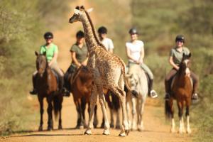 Pakamisa Private Game Reserve - Dokolwani