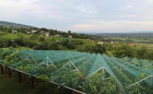 Vineyard Cottage Stepan