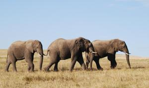 Lalibela Game Reserve (27 of 184)